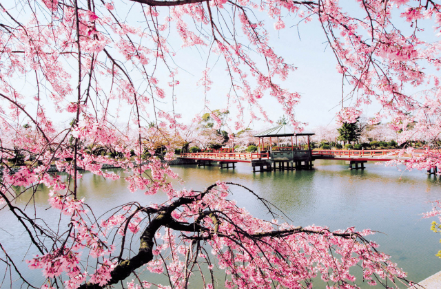 九華公園 さくらまつり