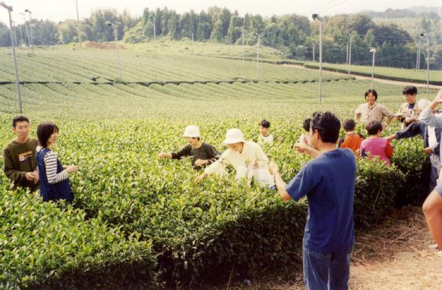 【2020年中止】亀山青空お茶まつり
