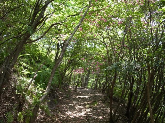 世界遺産熊野古道 荷坂峠