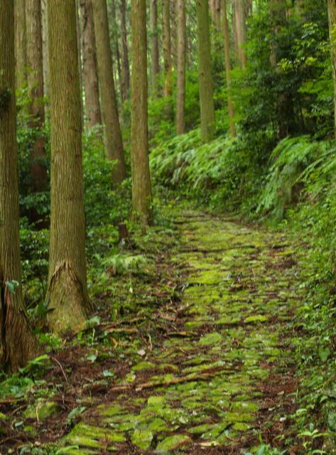 熊野古道横垣峠・風伝峠コース