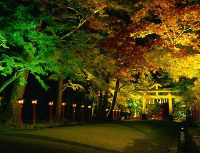 坂本 秋のライトアップ