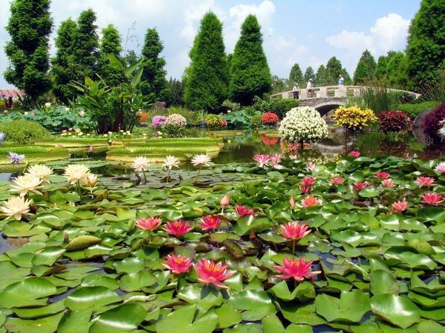 水生植物公園mizuno森