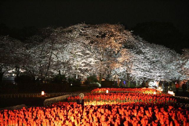 【開催中止】京都府立植物園「桜ライトアップ」
