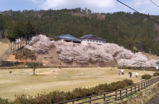 あやべ温泉の桜