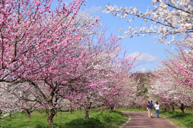 梅林公園うめ梅まつり