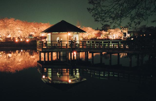 八条ヶ池 桜のライトアップ