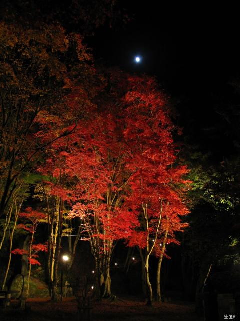 Kasagiyama maple park illumination★26364ba2212012018