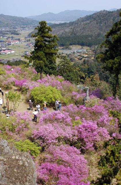 雲岩石公園杜鵑花節
