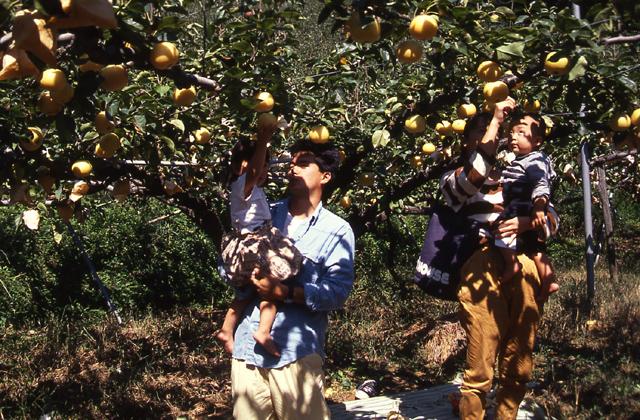 梨子、哈密瓜狩獵