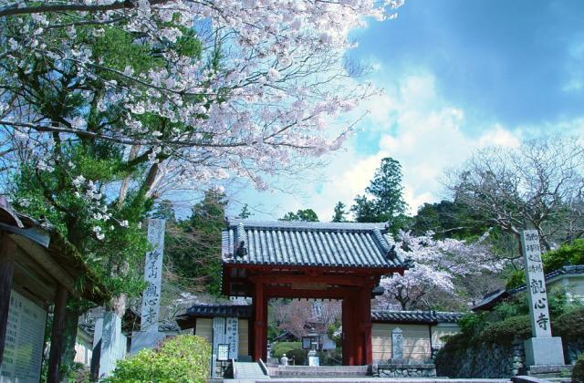 観心寺 桜の見ごろ