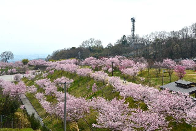 スマイルランド 竜田古道の里山公園