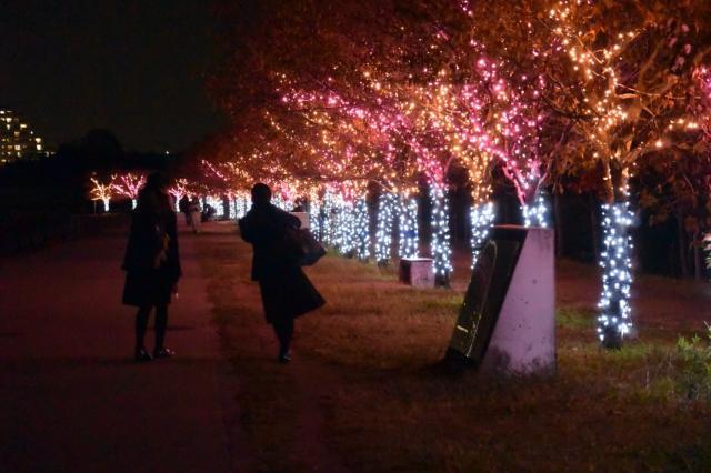 桜まつり~冬~イルミネーション~