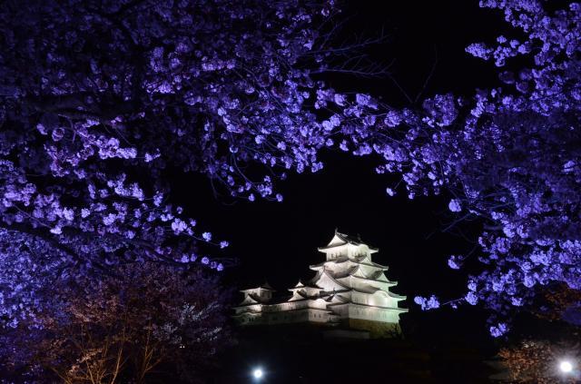 【中止】姫路城夜桜会