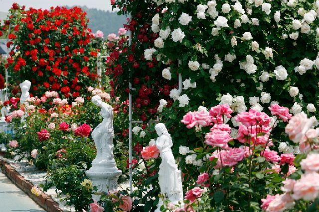 Himeji rose garden opening★28201ba2212059996
