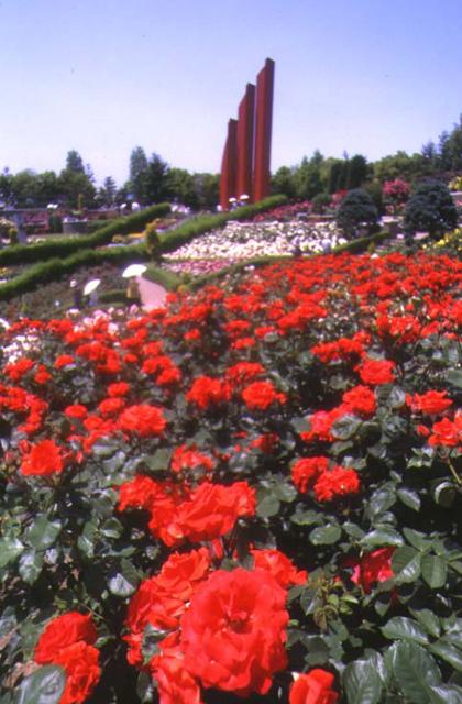 荒牧玫瑰花公園