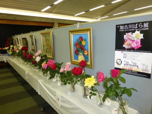加古川ばら展