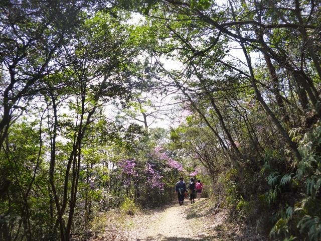 鴨池一周ハイキングコース