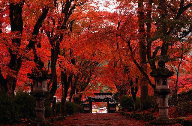 高源頭寺廟的紅葉