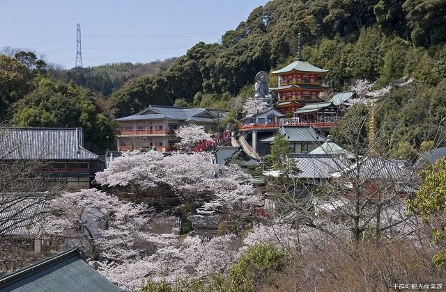信貴山的櫻花