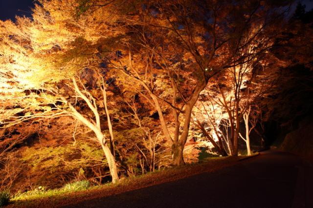 吉野山紅葉のライトアップ