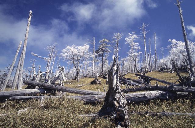 大台ヶ原山の樹氷