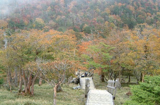 大台ヶ原の紅葉