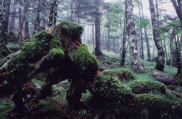 正木ヶ原の原生林