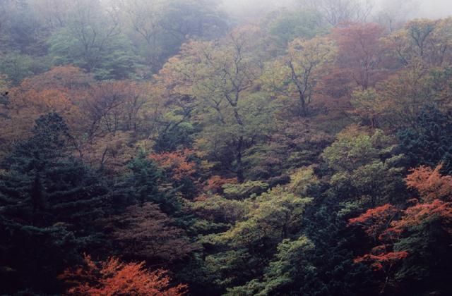 伯母峰の紅葉
