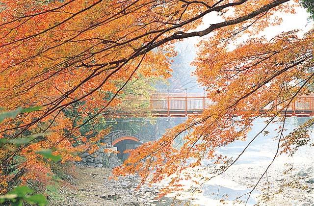 在丹生川上神社附近的紅葉