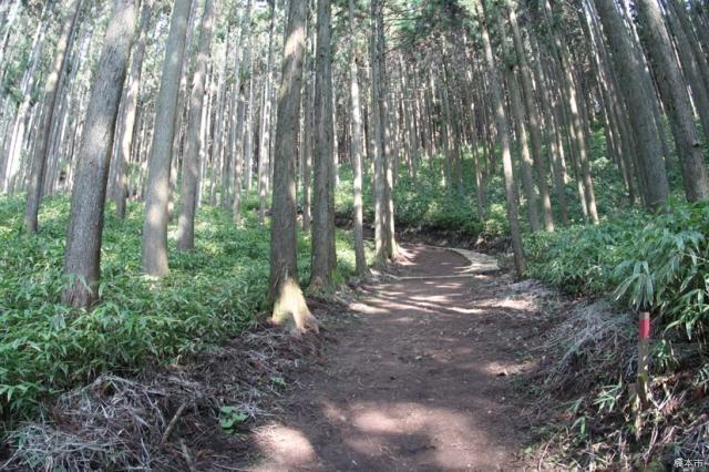 一本杉ハイキングコース