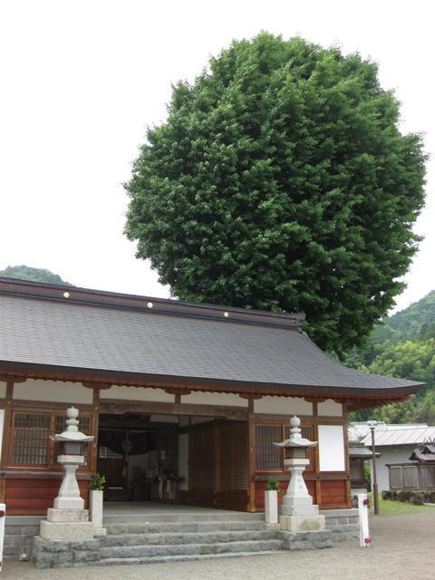 丹生神社的銀杏