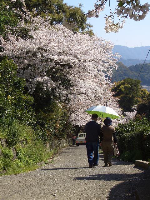 施無畏寺の桜