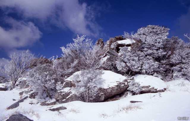 生石高原の霧氷