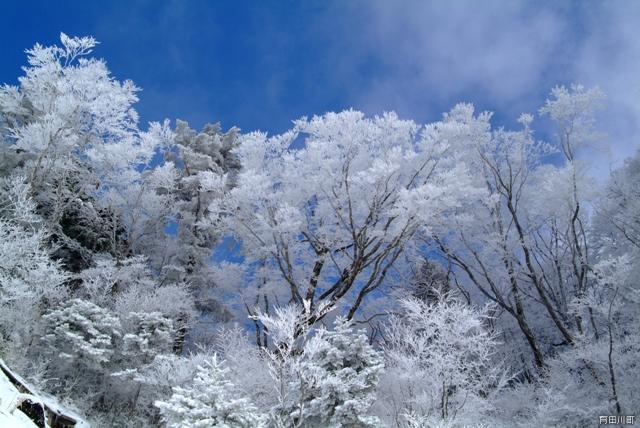 高野龍神スカイラインの霧氷