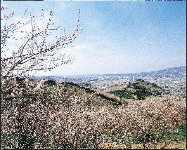 【令和3年休園】南部梅林(開催)