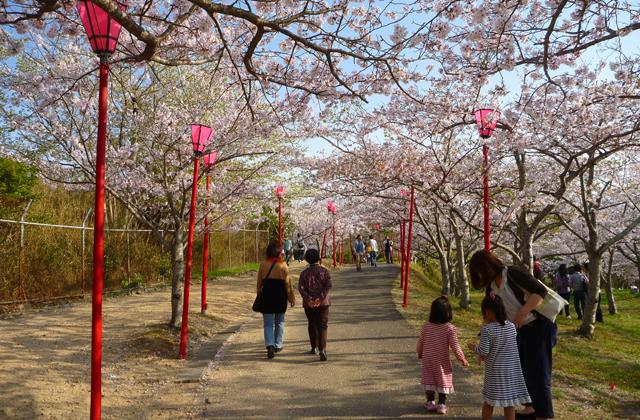 【2021年開催中止】桜まつり