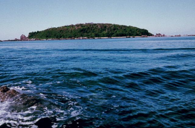 江須崎島植物群落