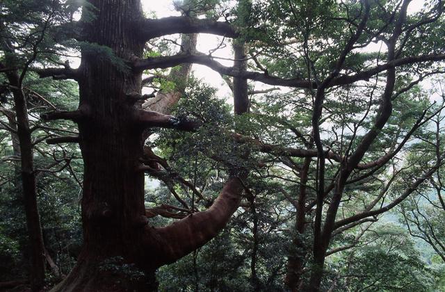 那智原始森林