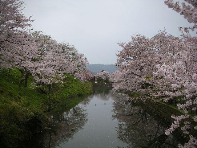 鹿野城跡公園の花見