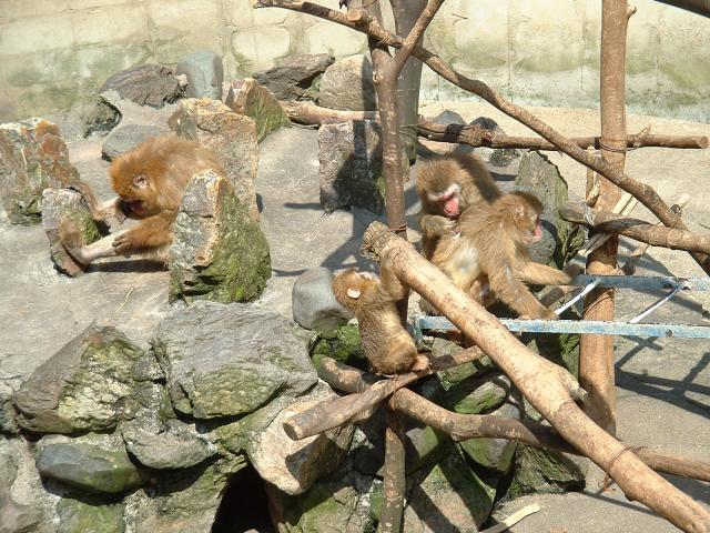 打吹公園小動物園