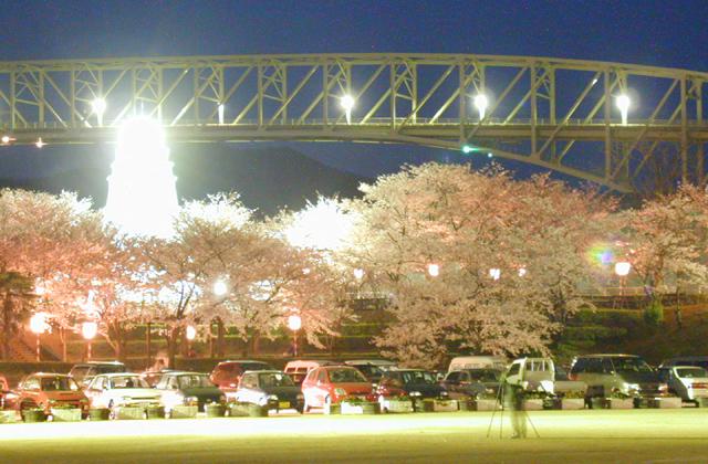 境台場公園桜まつり