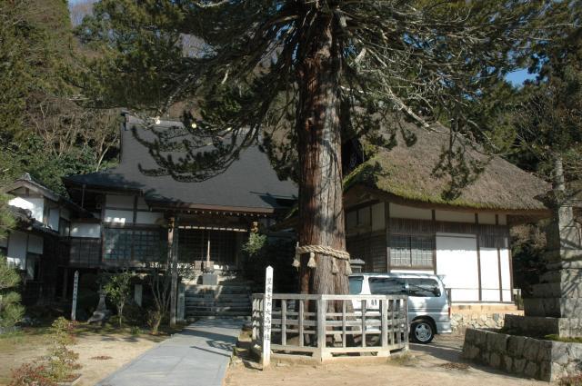 Bujouji temple's large cedar★31328ac2100120149