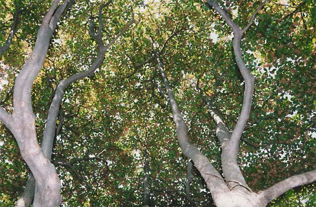 Mount Nagi rhododendron and Enkianthus perulatus★31328ac2100127416