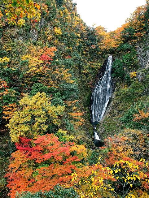 Waterfall of trouts★31369ab2040120182