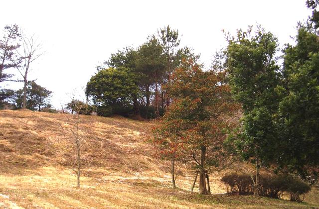 平田森林公園