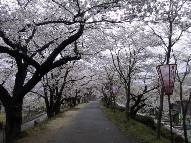 雲南市桜まつり