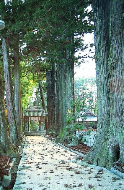 諏訪神社参道杉並木