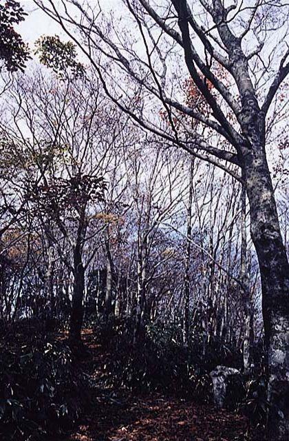 莇ke嶽的山毛櫸原生林
