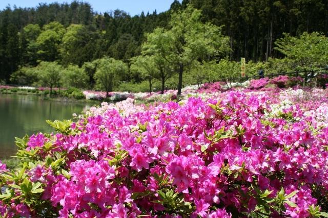 亀の原水鳥公園