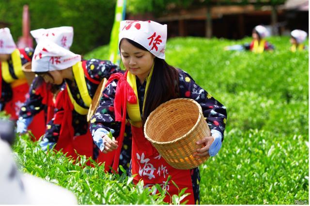 【中止】茶つみ祭